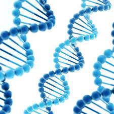 Struttura a doppia elica del DNA